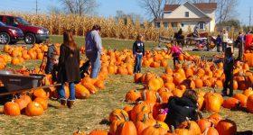 pumpkin-995416_1280